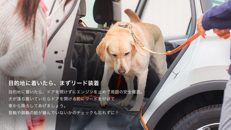 ペットと出かけよう。|旅先でのポイント|目的地に着いたら、まずリード装着