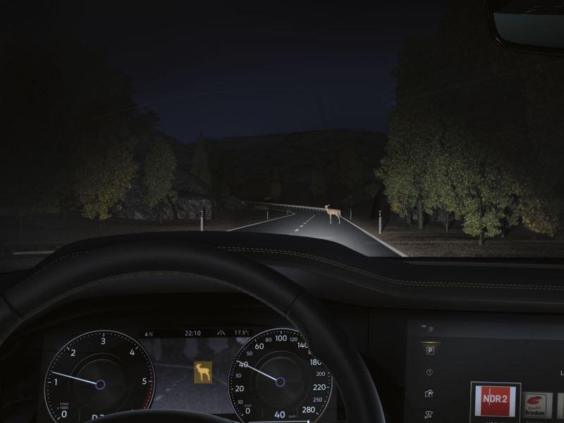 Ciervo en una carretera de noche delante de un Volkswagen Touareg