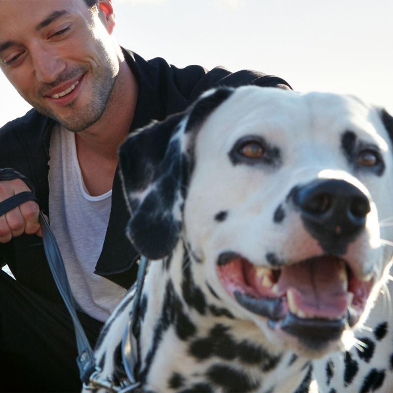 Mann mit Dalmatiner – Finanzierung