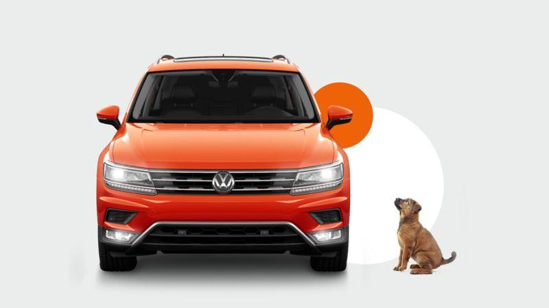 Dog sitting next to orange VW car