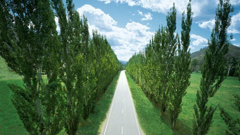 Eine grade Straße in einer Baumallee