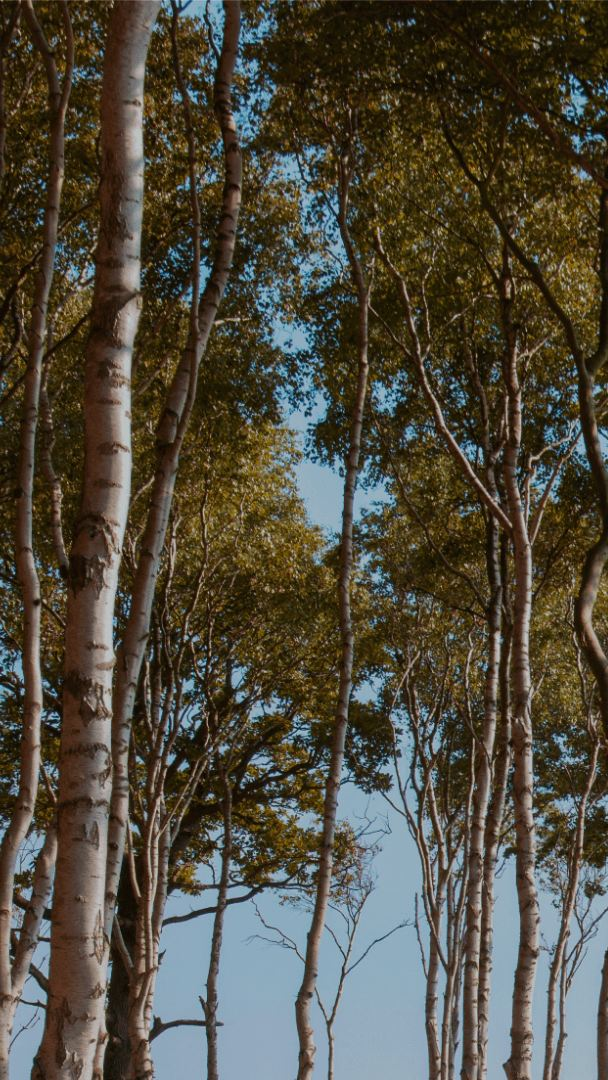 A picture of a grove