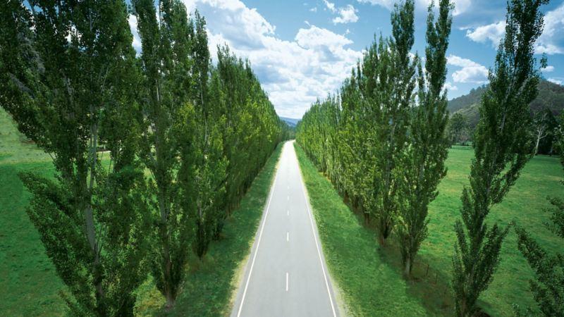 Una strada dritta lungo un viale alberato