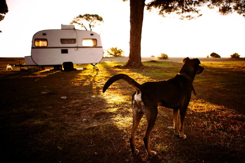 Ein Hund steht auf einem Feld mit Wohnwagen im Hintergrund.