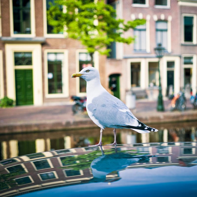 Gulls also like the electric car