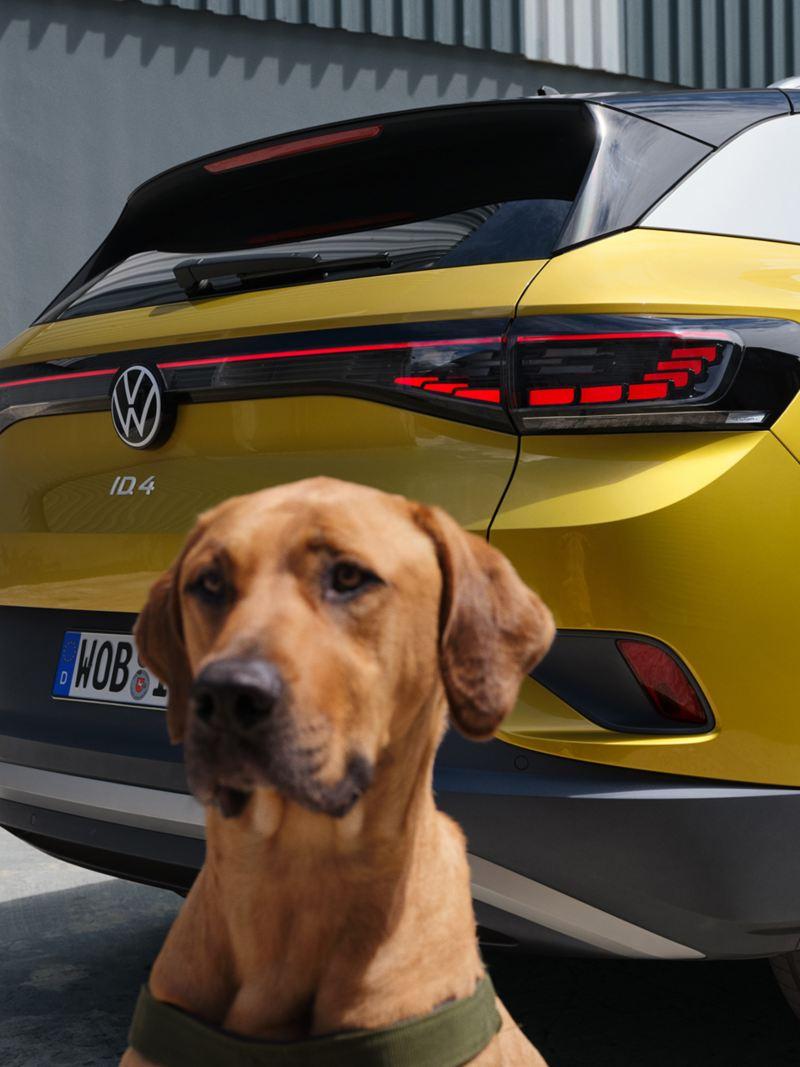 Ein Hund sitzt vor einem ID.4