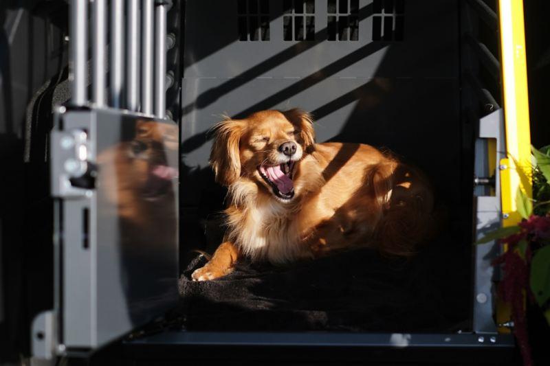 Hunden Ester ligger i sin hundbur från Volkswagen