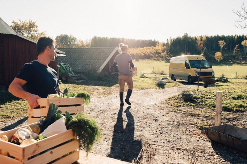 Auf dem Land packen Männer Gemüsekisten in einen Transporter.