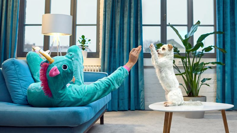 Ein Mann im Einhornkostüm spielt mit seinem Hund daheim.
