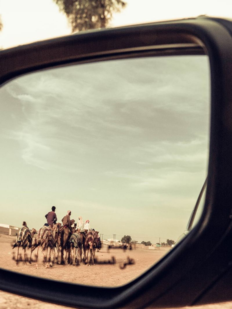 Camels in the side mirror of the VW Teramont