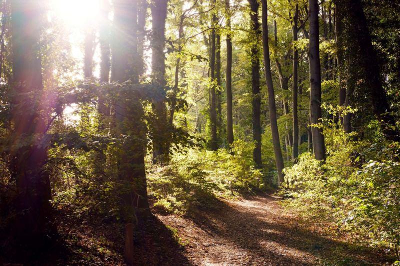 Waldweg im Sonnenlicht.
