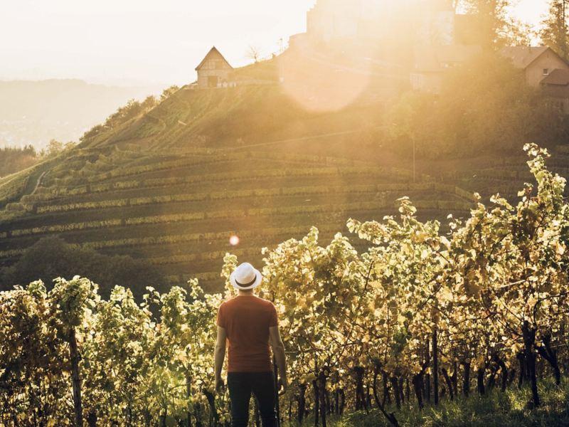 Ein Mann schaut auf einen Weinberg.
