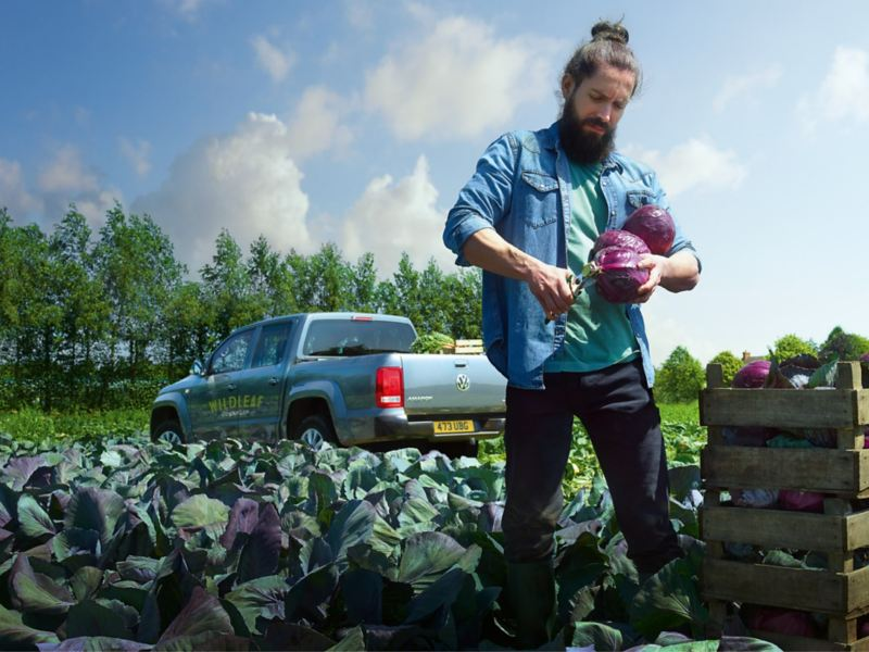 Farmer picking cabbages by VW Amarok