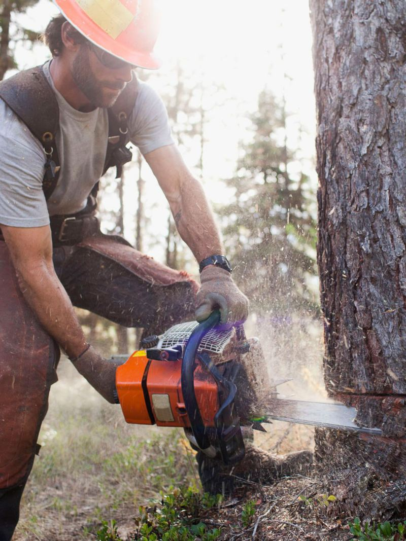 hombre con motosierra cortando un arbol crafter chasis