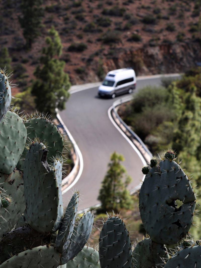 Kaktus med Volkswagen Grand California husbil i bakgrunden