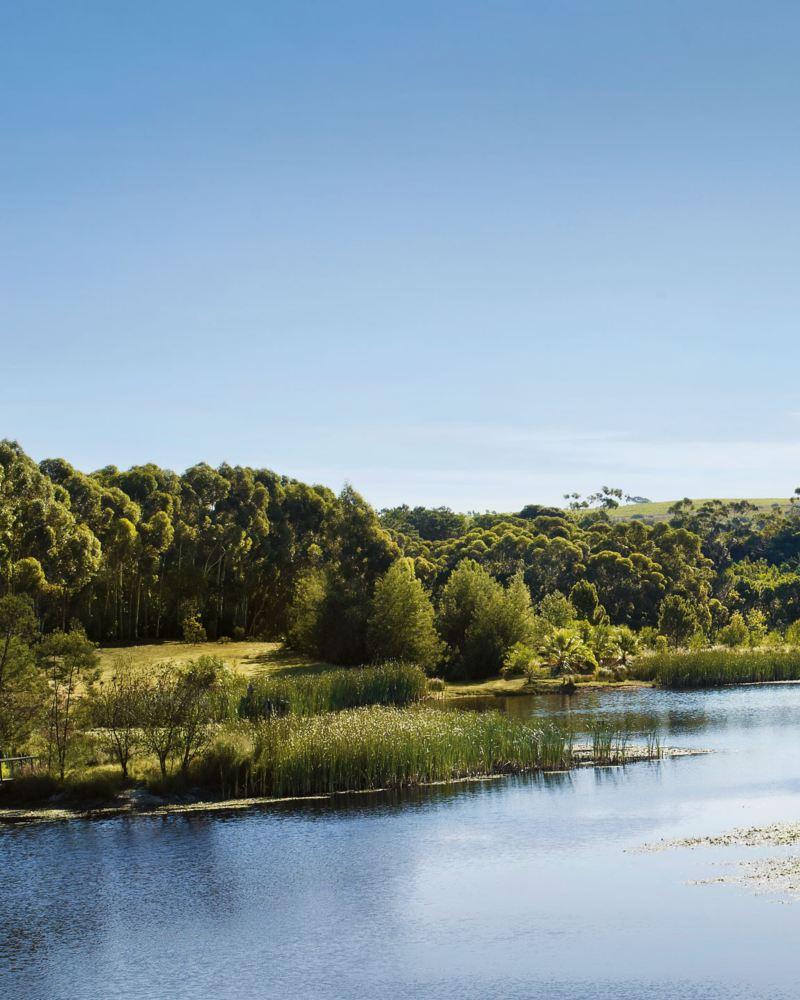 Grönt landskap och natur