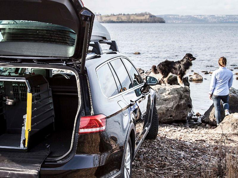 Hund och ägare vid en Volkswagen bil