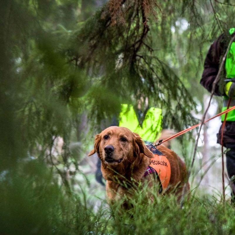Specialsök med hund, Missing people skallgångskedja