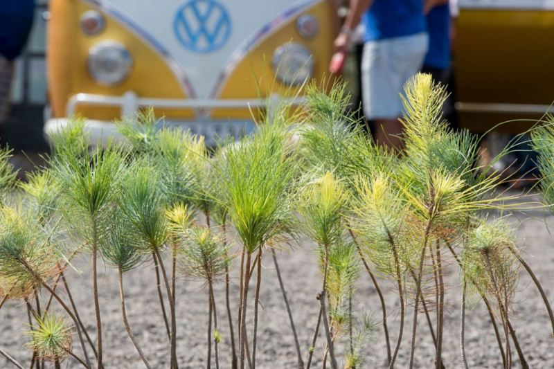 Campaña reforestacion Volkswagen Canarias