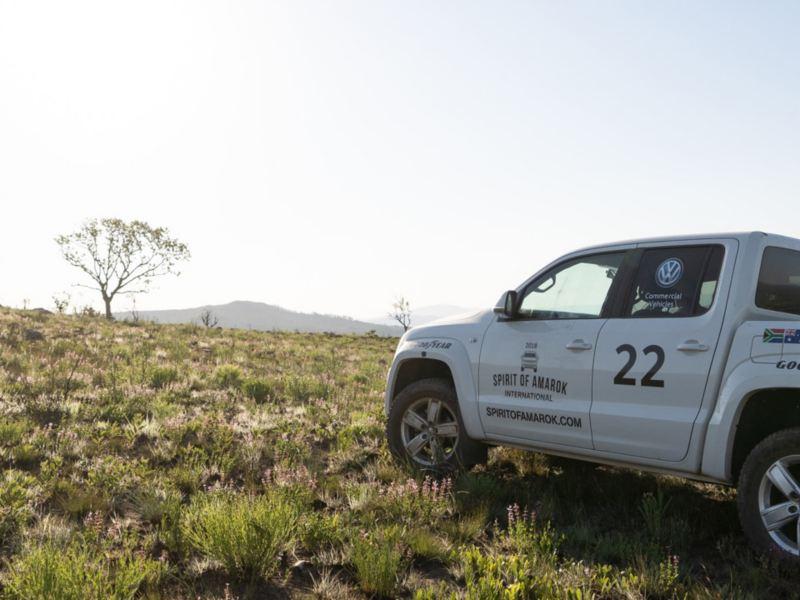 Ein weißer Amarok steht in der weiten Graslandschaft Südafrikas.