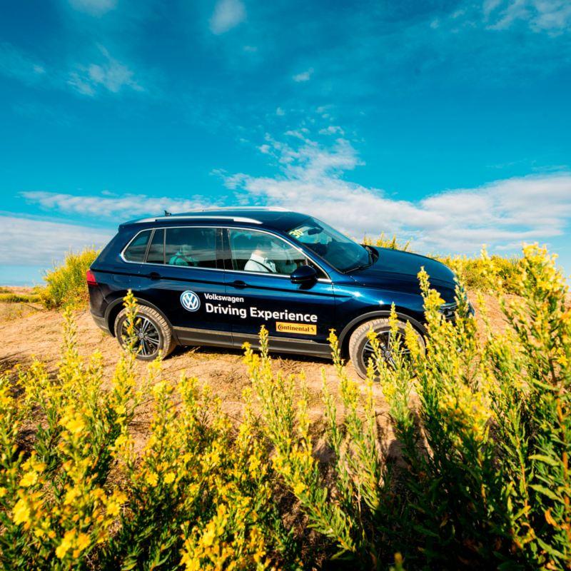 Volkswagen circulando fuera de la carretera en un campo de flores amarillas