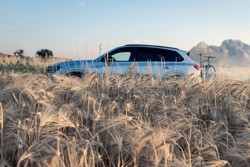 Volkswagen Touareg  eHybrid visto de costado en medio de un campo de trigo