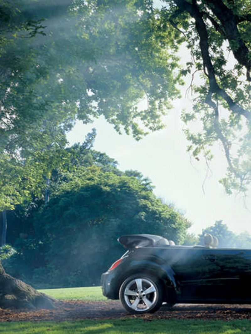 A black Volkswagen Beetle Cabriolet, under a tree, the roof down.