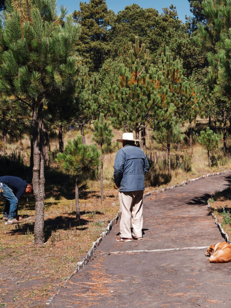 Empleados de CONANP y Volkswagen México trabajando en el proyecto de protección y conservación ambiental Itza-Popo