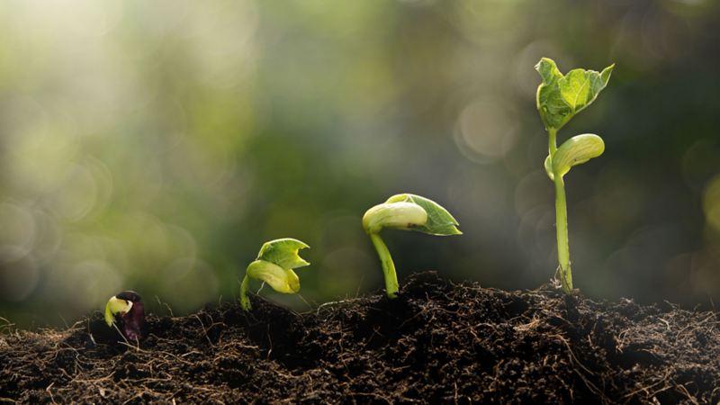 Recuperación de fertilidad de suelos de Parque Nacional Izta-Popo. Programa Por Amor a México de VW