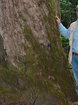 Mtro. Enrique Jardel, ganador de Por Amor a México trabajando en reforestación de áreas verdes