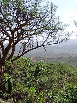 Dr. Ricardo Rodríguez ganador de Por Amor a México VW por conservación de aves rapaces