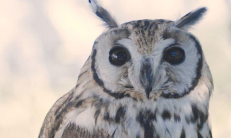 Aves Konkon conservadas en proyecto ecológico ganador de premio de concurso Volkswagen