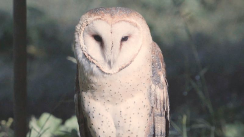 Proyecto de Conservación de Aves Rapaces ganador de Por Amor a México de Volkswagen