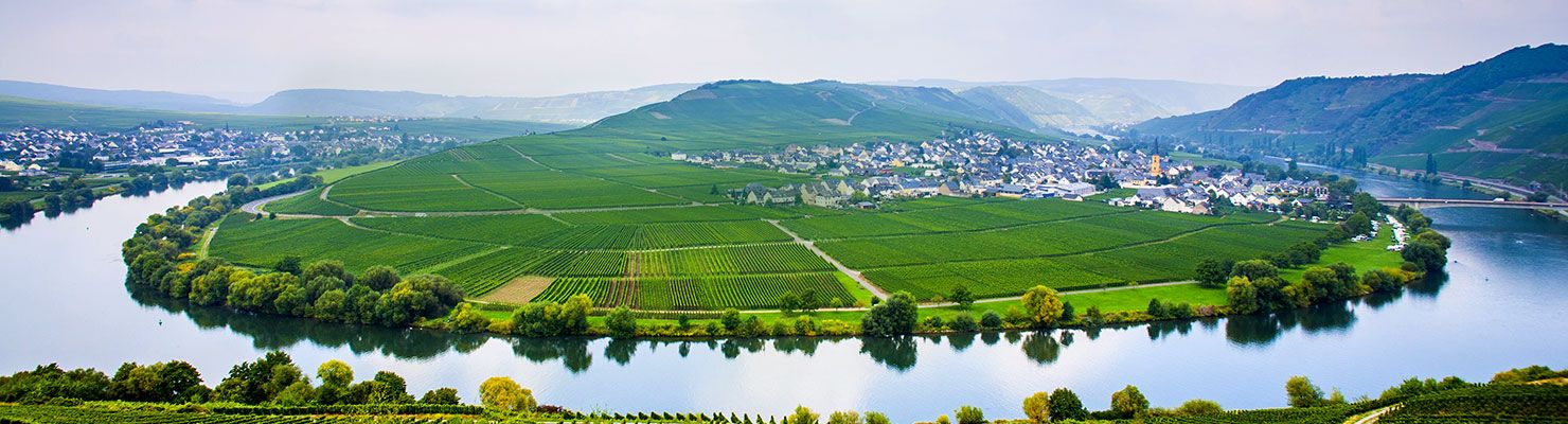 German vineyard