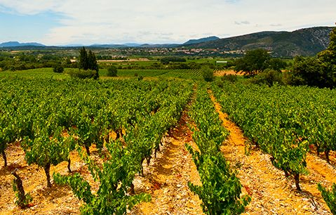 Reliably brilliant: The Rhone