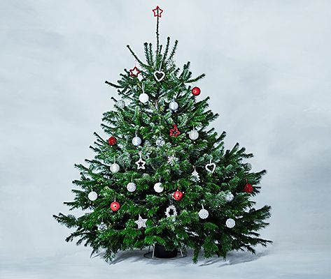 About our Christmas trees