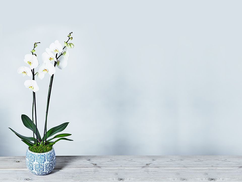 Hints and tips to care for your orchid