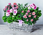 Mother's Day plants in a basket