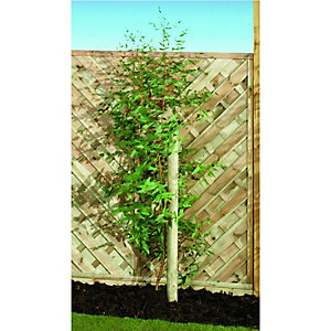 Image of Wickes Timber Garden Tree Stake - 50mm x 2.4m