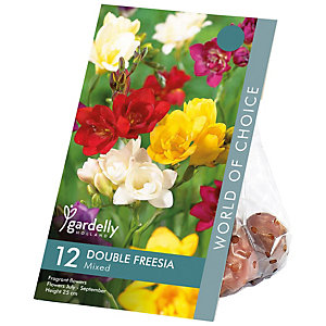 Freesia double Mixed Flower Bulbs