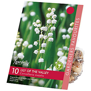 CONVALLARIA Lily of the Valley Bulb