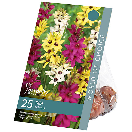 Ixia Mixed Coloured Flower Bulbs