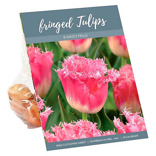 Fancy Frills Tall Fringed Tulips