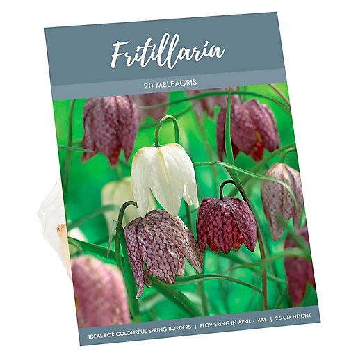 Fritillaria Meleagris Checkered Petal Bulbs