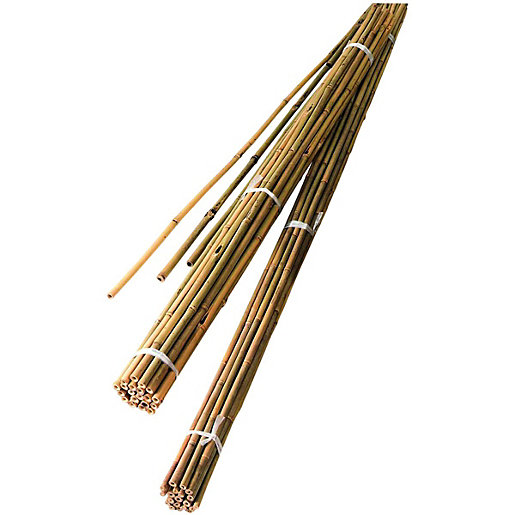 Bamboo Canes 8ft 2.4m PK 10